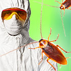 Как легко избавиться от тараканов быстро и навсегда